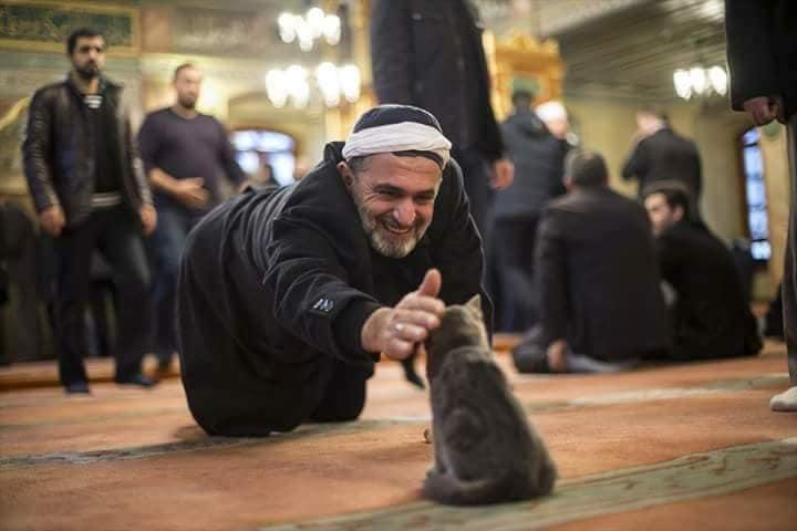 بالصور.. لمن يشمئز من القطط ويكره دخولها البيت!!!