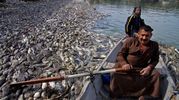 الأنبار.. منع عبور الأسماك بين المدن بالمحافظة