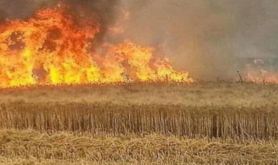 """""""دواعش"""" يختطفون فلاحين اثنين ويحرقون محاصيلهما الزراعية في خانقين"""